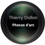Portrait de dollon